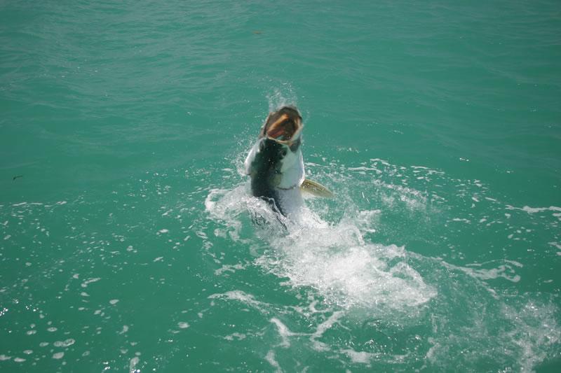 Key west tarpon fishing photos for Key west tarpon fishing